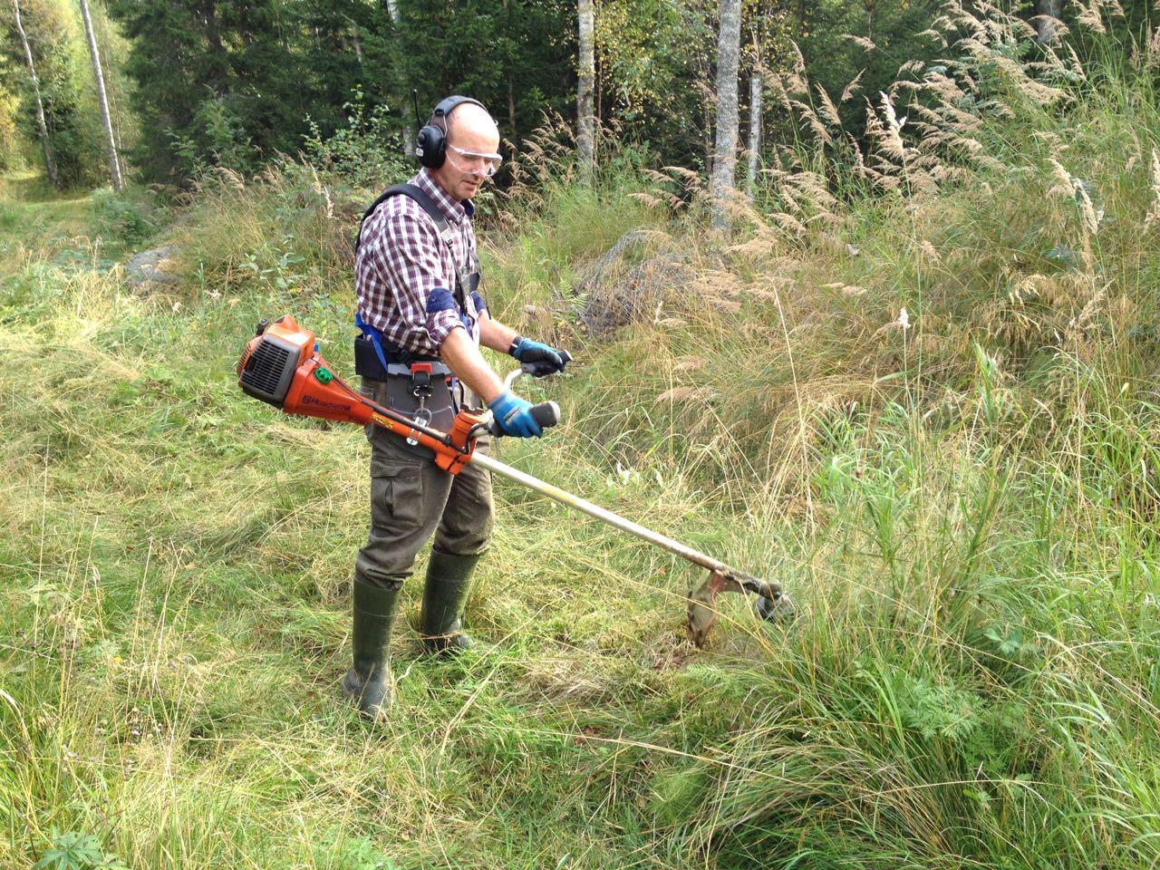 Peter trimmar det höga gräset på skidspåret nära Vekasund.