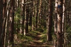 Trolsk skog mellan Stråkan och Hallonnäs.