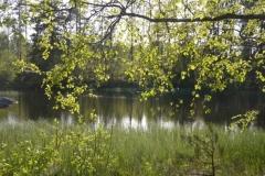 Strömssund i den fina försommargrönskan.